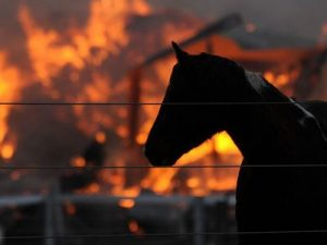 burning-barn-horse